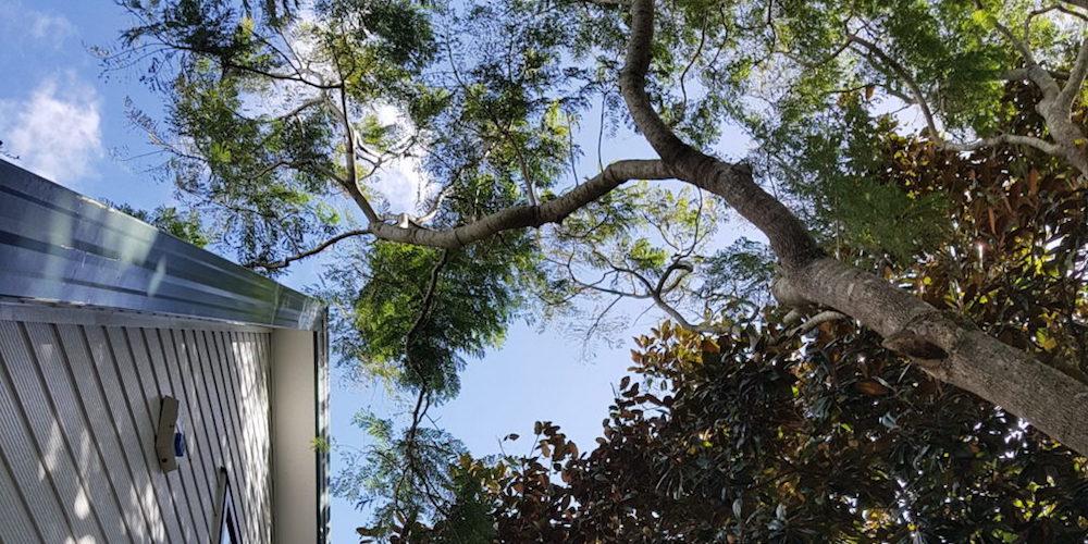 tree-v-house-2