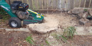 Using our stump grinder to remove the Phoenix palm stump