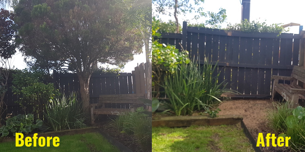 Conifer before and after